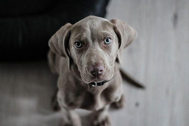 síntomas en los perros