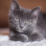 Insuficiencia renal en gatos