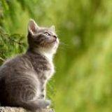 Estrés en gatos: Síntomas y Consecuencias