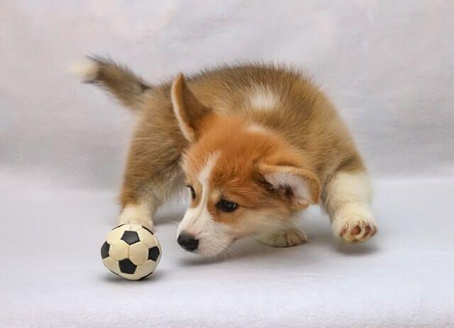 Traer la pelota
