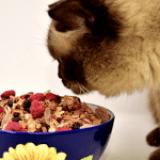 Mascotas veganas y su efecto en la salud