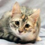 Detectado el primer gato infectado por Coronavirus en España