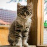 Adoptar a un gato