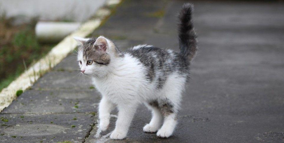 adoptar a un gato callejero