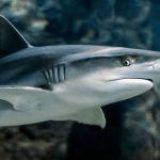 ¿Puedo tener un tiburón como mascota?