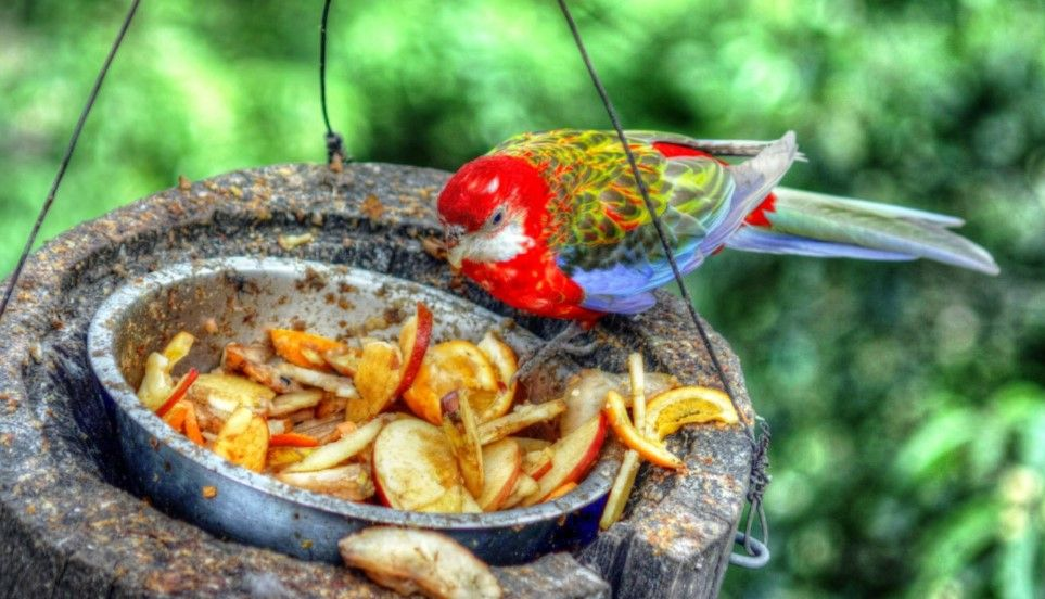 aves alimentacion