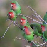 Cuidado de las aves como mascota