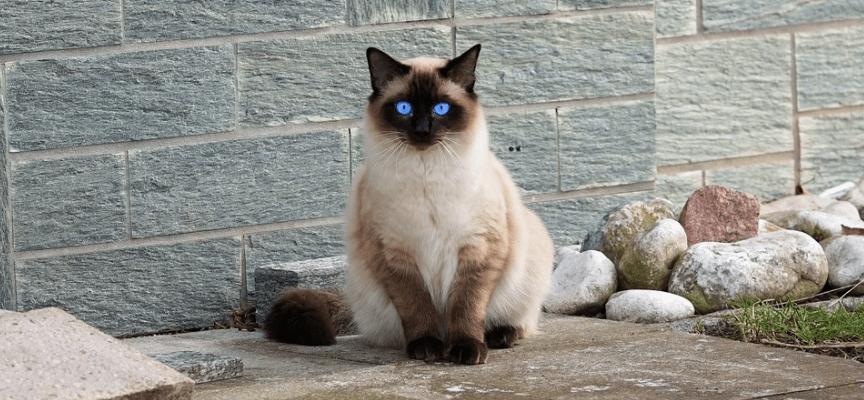 gatos que no crecen