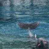Todo sobre los Delfines Rosados