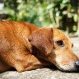 ¿Qué hago si muere mi mascota?
