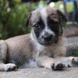 ¿Por qué existen tantas razas de perros?