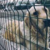 El mundo de las perreras