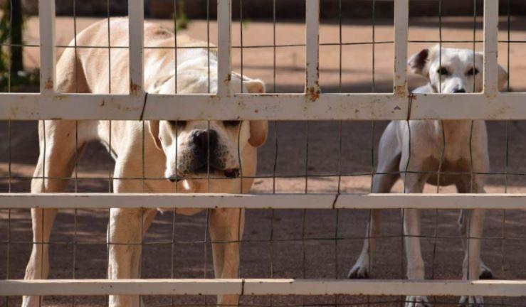 perreras para perros