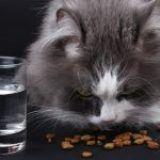 ¿Qué alimentos son dañinos para los gatos?