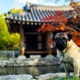 Guía para viajar con perros y no llevarse sorpresas