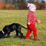 Perros grandes o pequeños… ¿Cuáles son los preferidos por los niños?