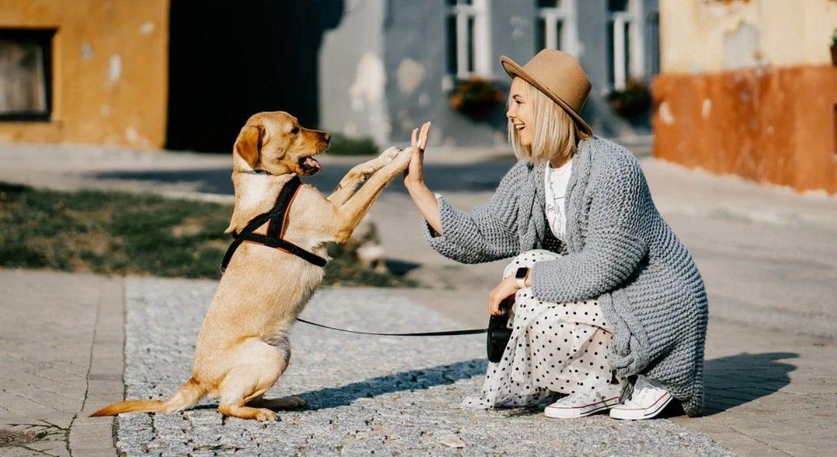 raza de perro adoptar
