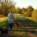 """¿Cómo encontrar un """"cuidador de perros"""" que cuide de nuestro perro?"""