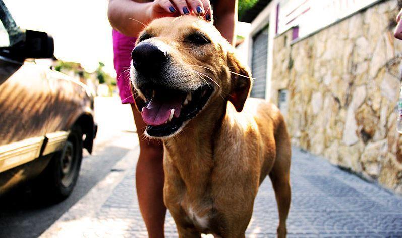 cuidador mascotas