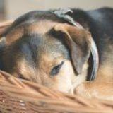 Soñar con perros: ¿Qué significa?