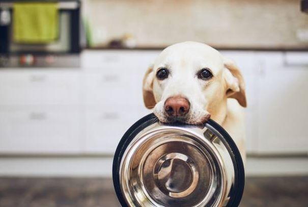 cuales son los gastos básicos de tener un perro