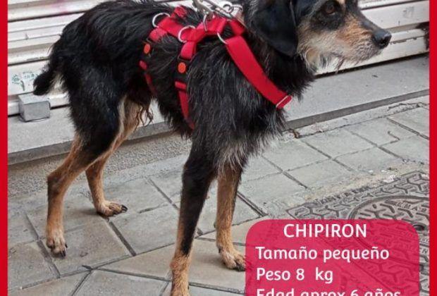 CHIPIRÓN