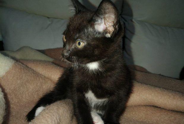 Gatitos 2 meses (Ron y Cola)