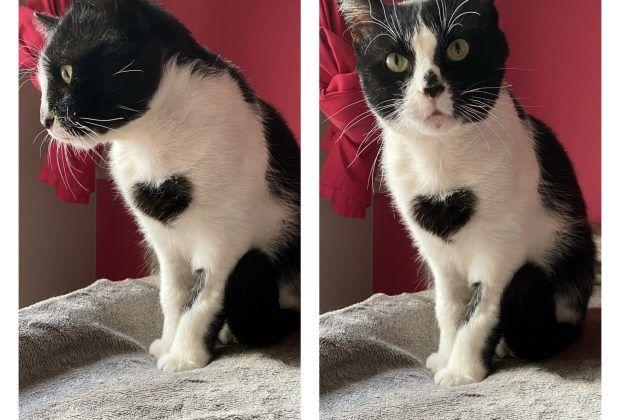 """Luny, el gato con """"dos"""" corazones"""
